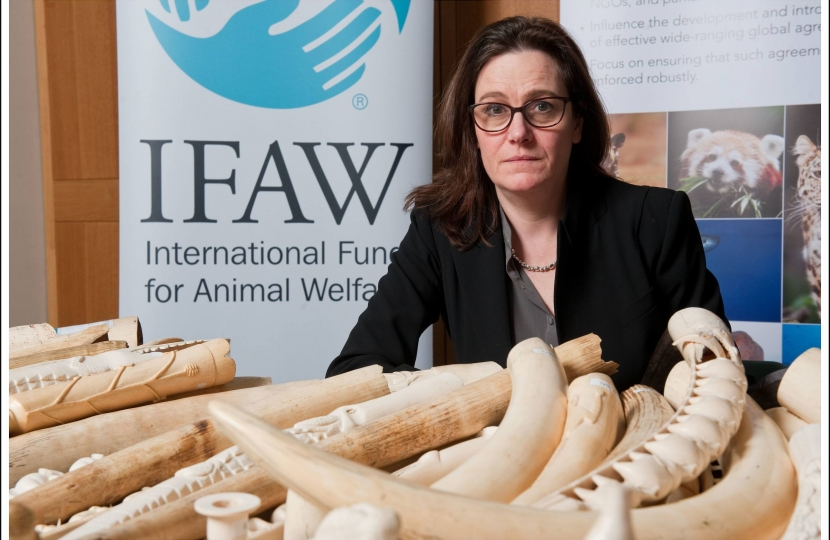 Rebecca Harris MP Calls Time On The Ivory Trade